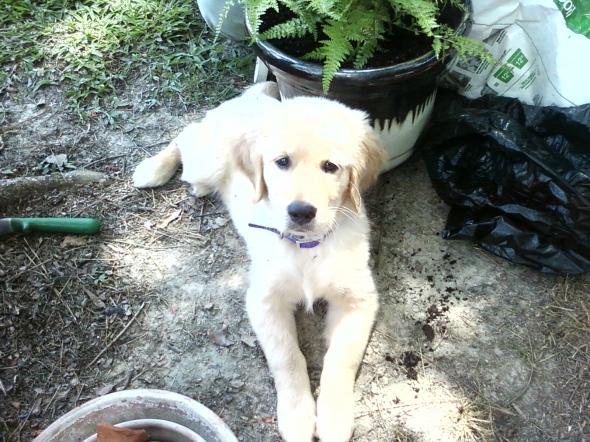 Garden Puppy 3 thek9harperlee