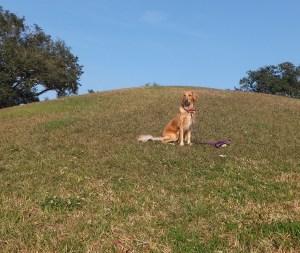 Indian Mound 1 thek9harperlee