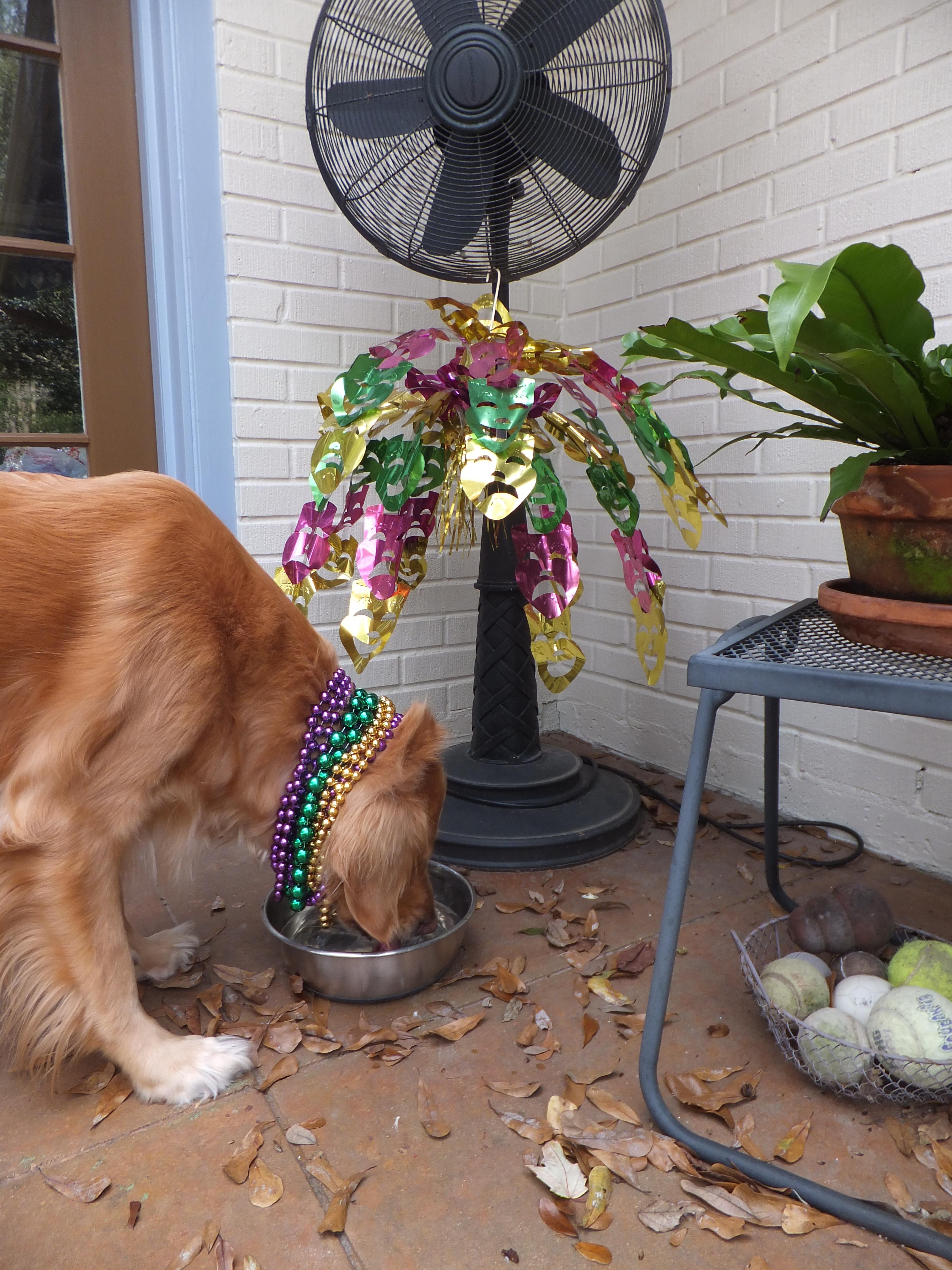 Mardi gras thek9harperlee page 2 mardi gras chandelier thek9harperlee arubaitofo Choice Image
