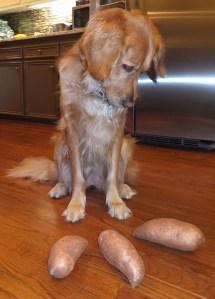 One Potato thek9harperlee