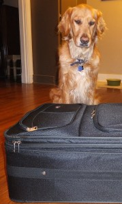 Suitcase thek9harperlee
