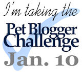 Third Pet Blogger Challenge