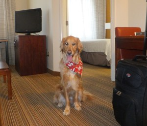 At the Hotel thek9harperlee