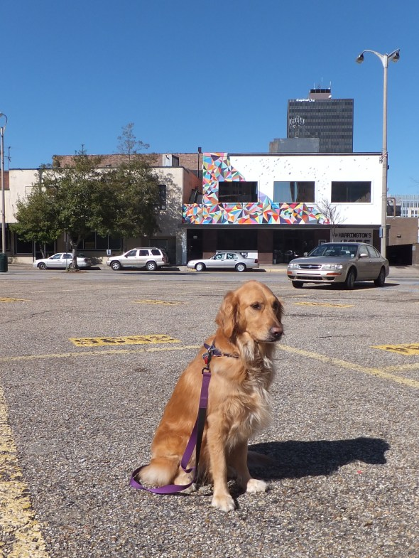 Downtown 3 thek9harperlee