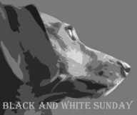 Black and White Sunday thek9harperlee