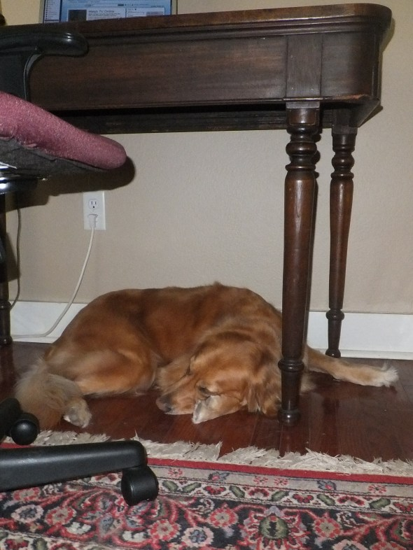 Under Desk Nap thek9harperlee