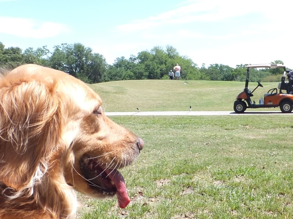 Golf thek9harperlee