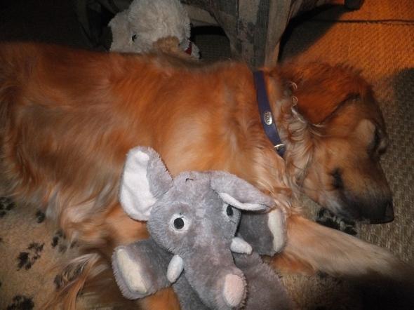 Sick Puppy 4 thek9harperlee