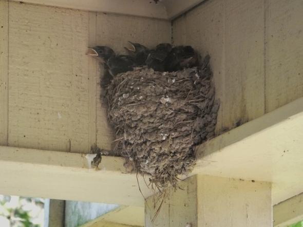 Baby Birds thek9harperlee