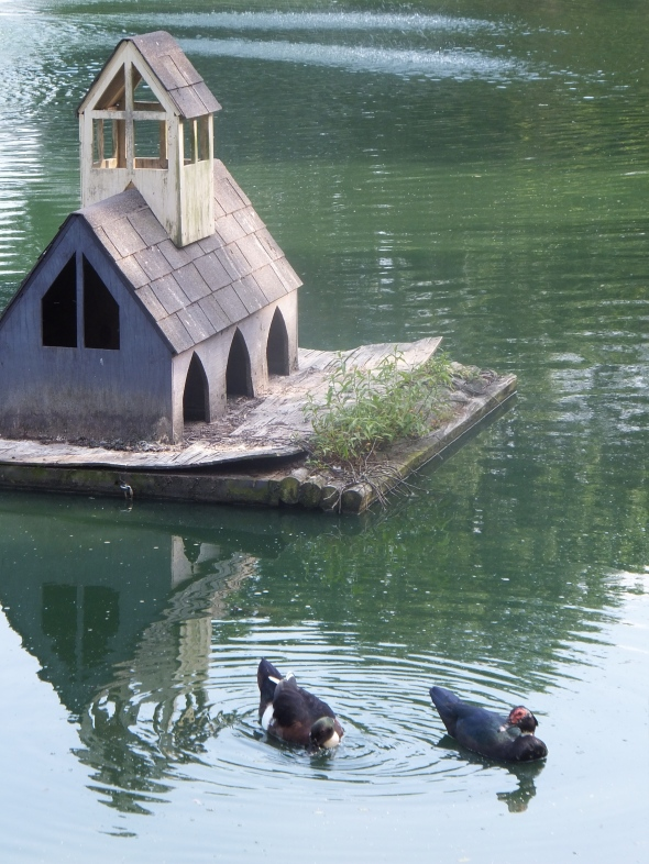 Ducks thek9harperlee