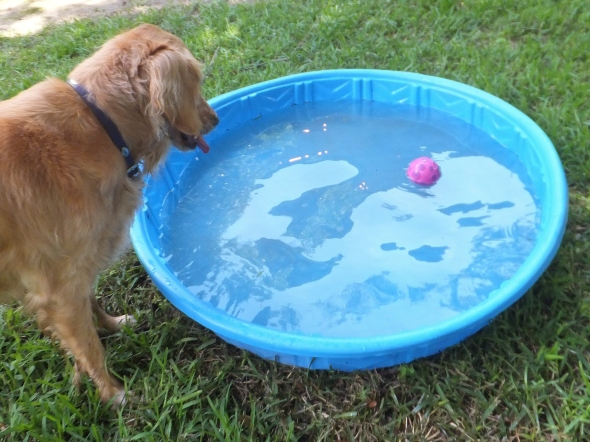 Pool Party 5 thek9harperlee