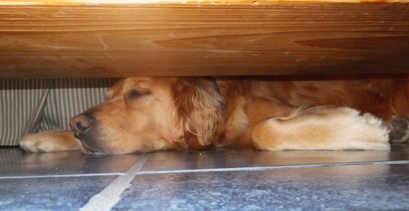 Tired Pup thek9harperlee