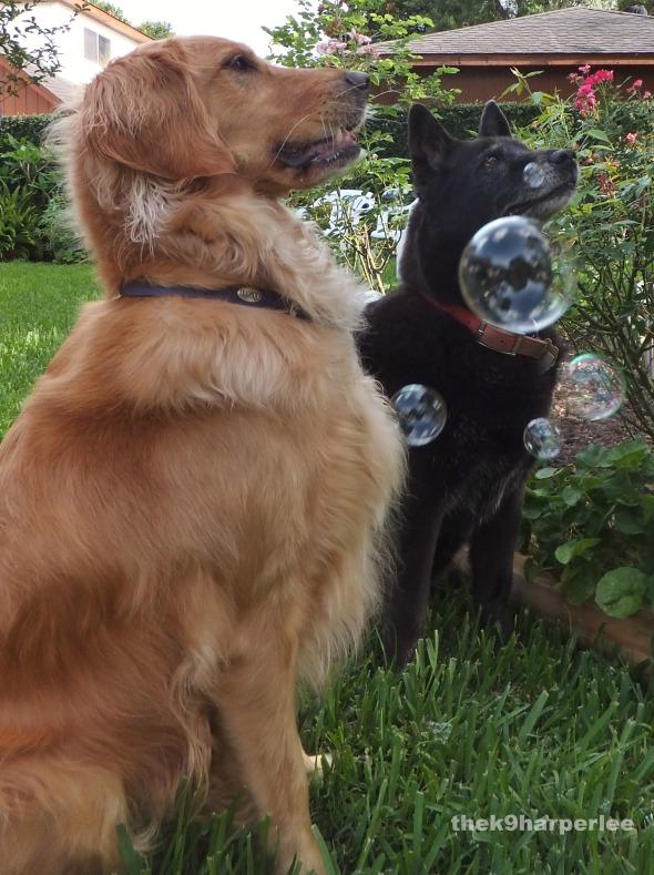 Mille Bubbles thek9harperlee