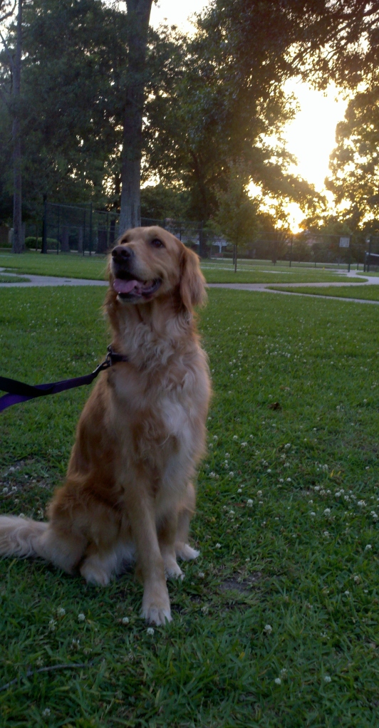 Sunset thek9harperlee