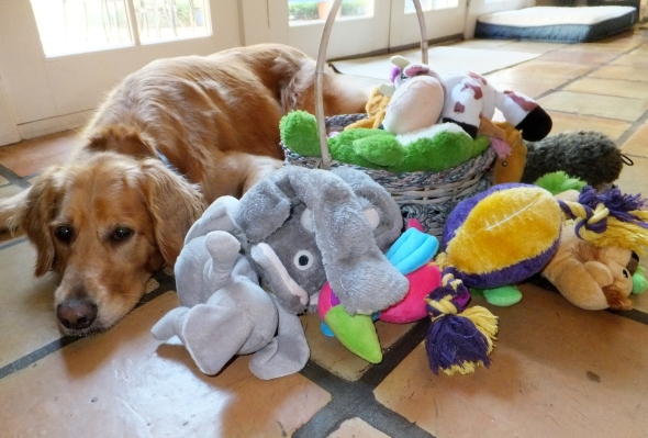 Toys out thek9harperlee
