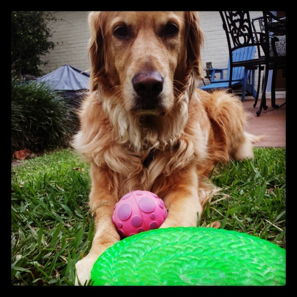 October Photo Challenge: Day 8-Play Time