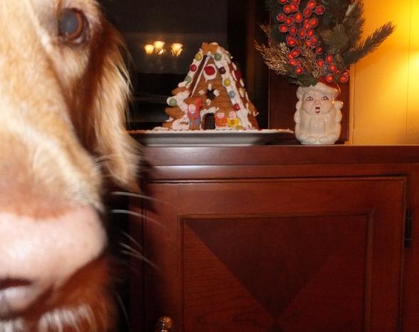 Ginger 6 thek9harperlee