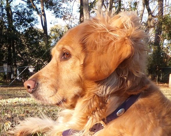 Wind in My Hair thek9harperlee