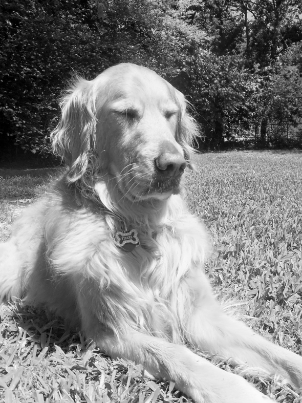 B&W 5-23-14 Meditation Mode thek9harperlee