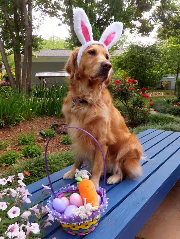 Easter 2 thek9harperlee