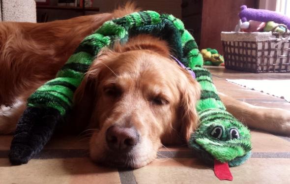 Snake 2 thek9harperlee