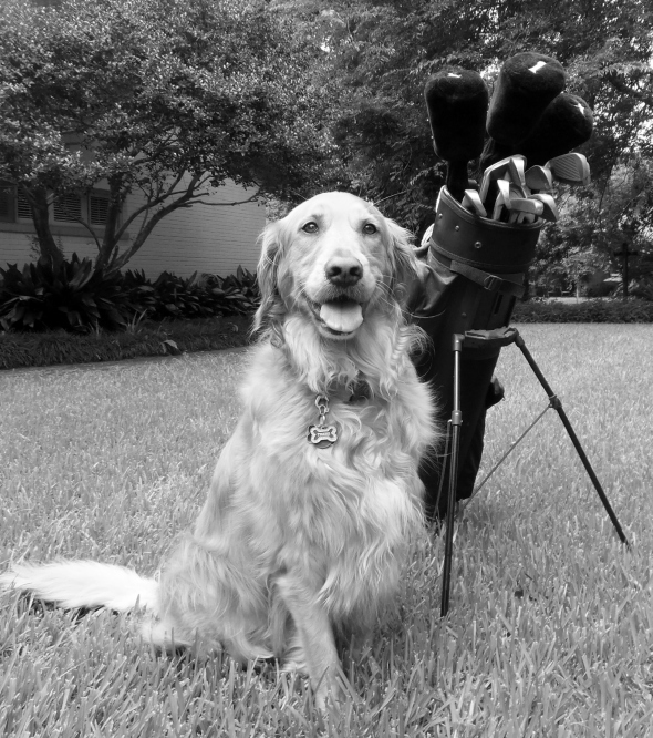 B&W Fore! 1