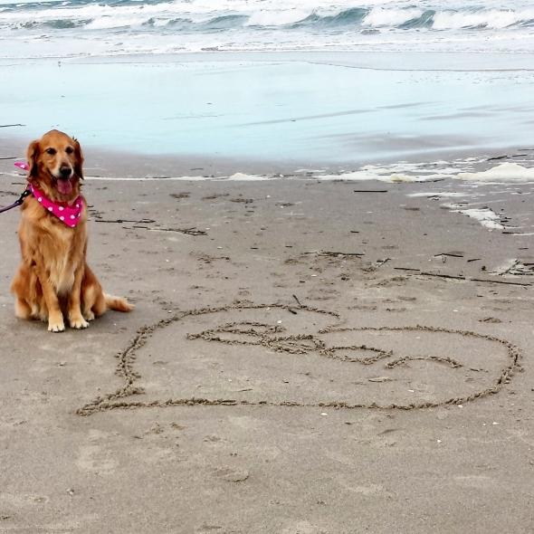 HL Beach 11 thek9harperlee