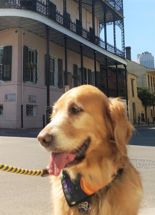 haunted-nola-sultans-palace-3-thek9harperlee