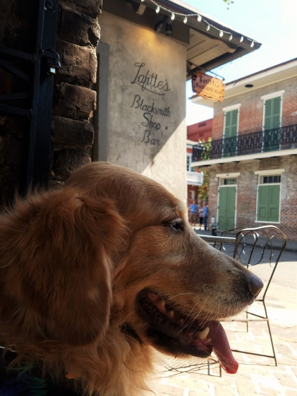 lafittes-lalaurie-2-thek9harperlee