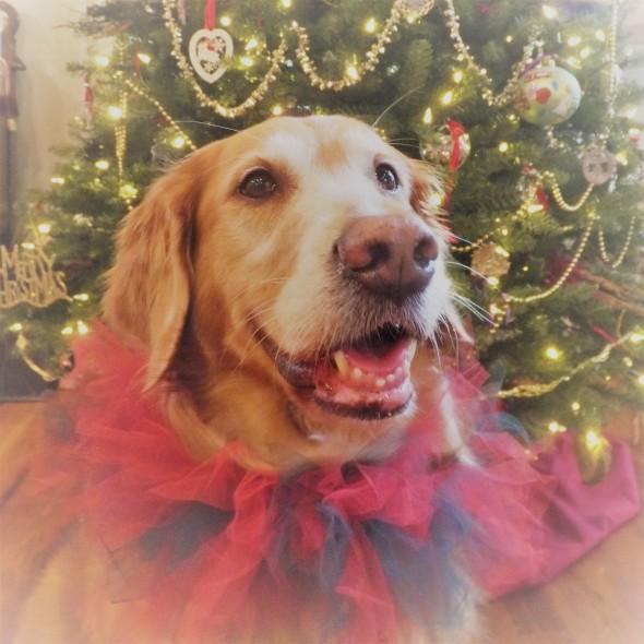 christmas-2-2016-thek9harperlee